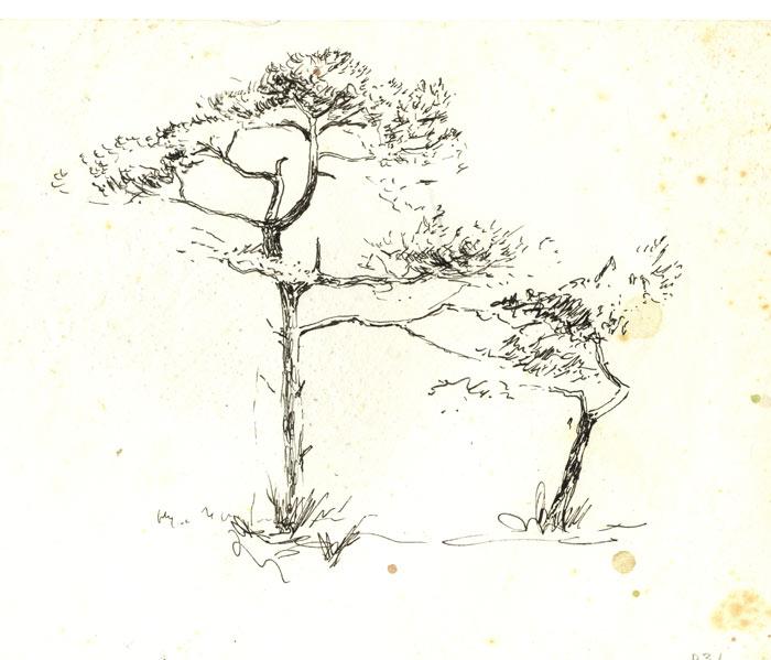 pins en dessins